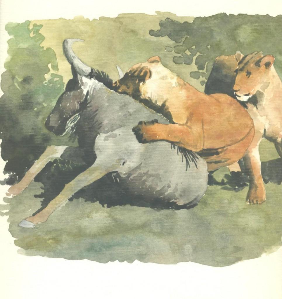 leonesse gnu acquarello
