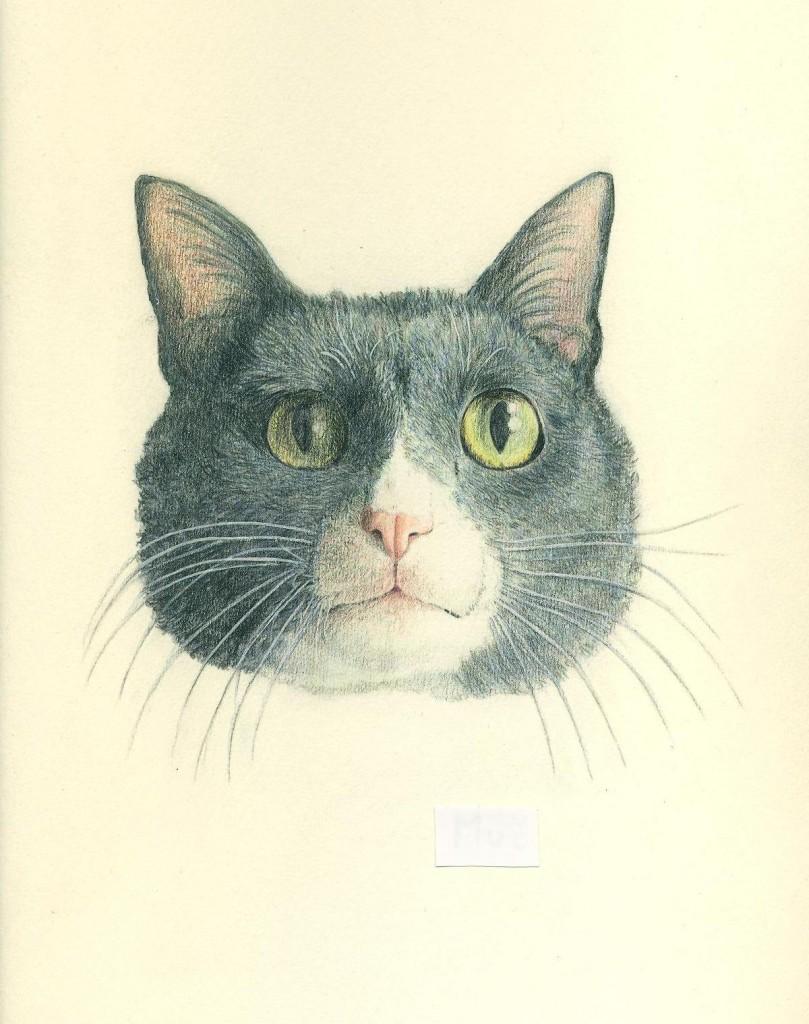 gatto Acquarello e matita
